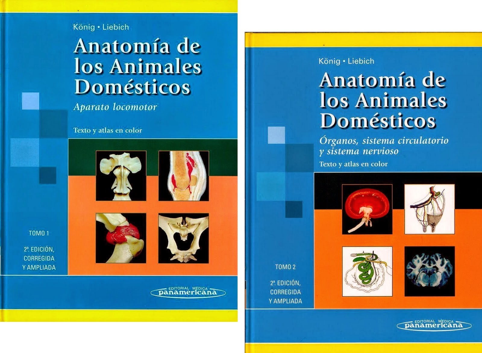 Atlas digital de osteologia veterinaria - Cable tv playout software ...