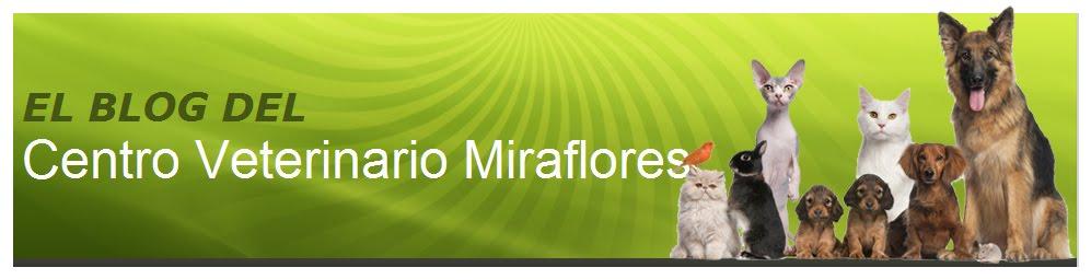 Centro Veterinario Miraflores