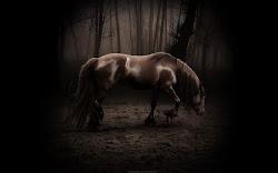 wallpaper gambar foto binatang, hewan