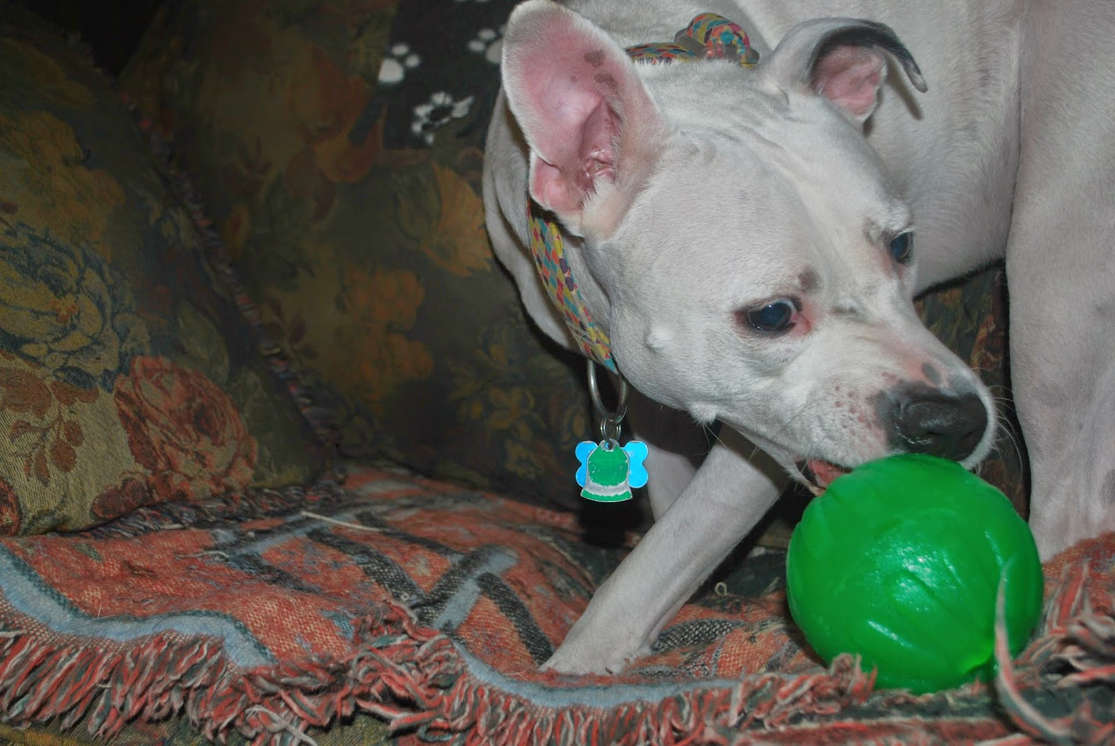Can Dogs Eat Catnip Toys
