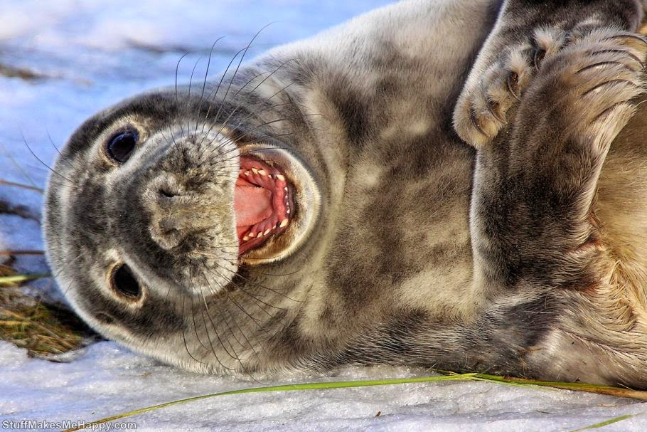 Sea lion or seal 1 (Photo by Airwolfhound)