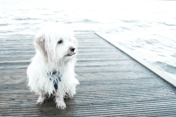 Spaziergang zum See