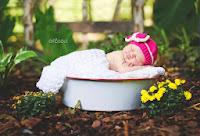 Ponderosa Baby