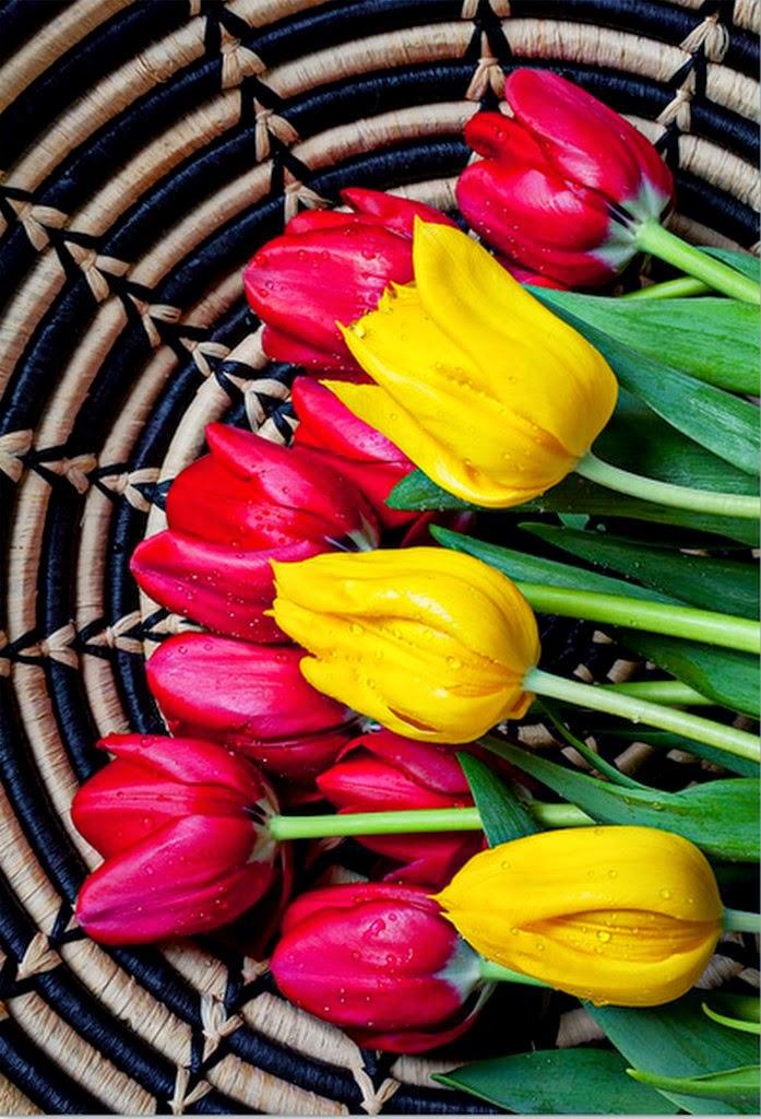 imagenes-de-flores