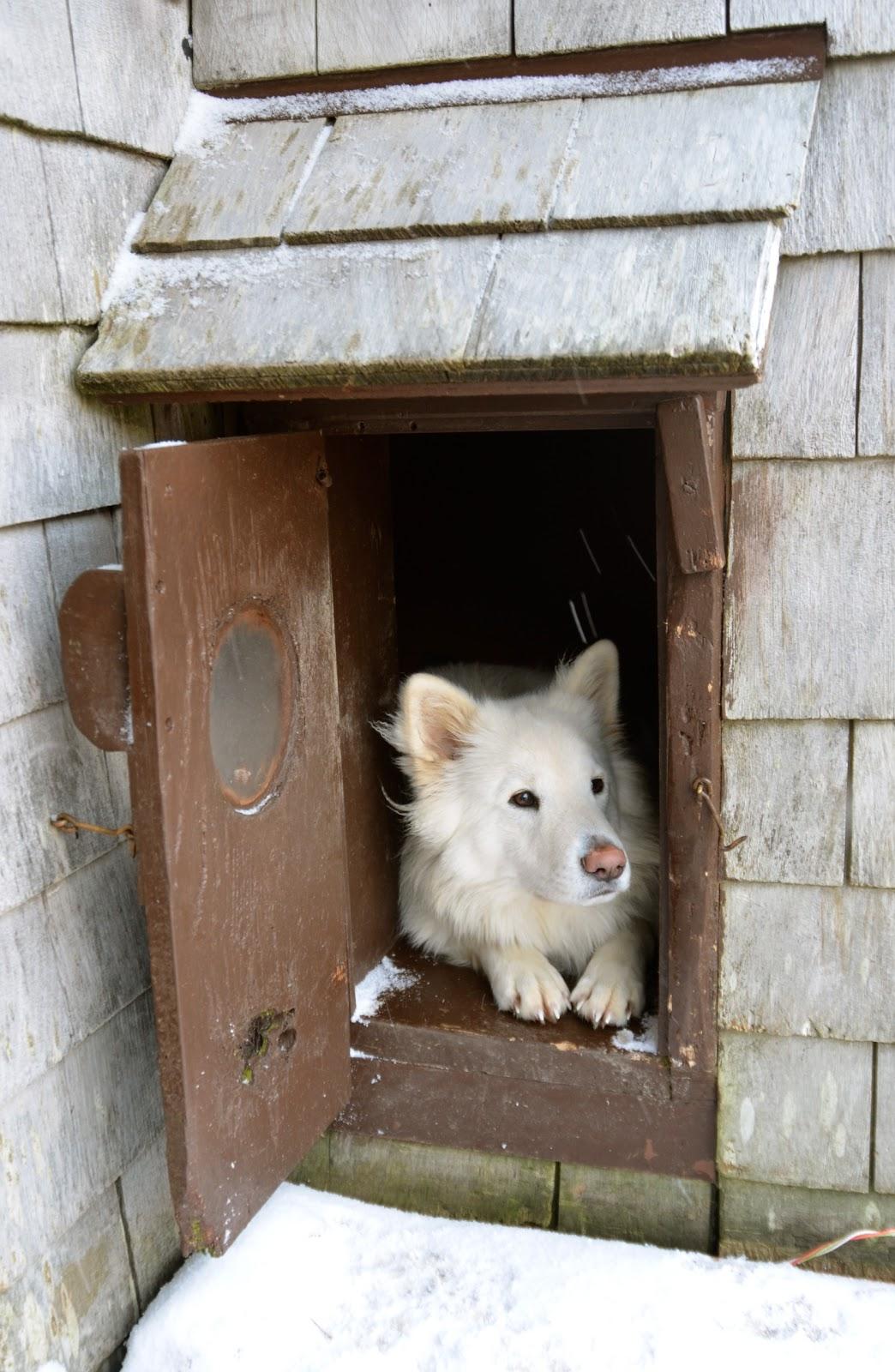 """Képtalálat a következőre: """"dog home winter"""""""