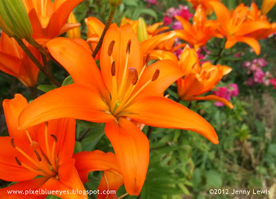 Jenny Lewis photo of orange day lilies with purple roses