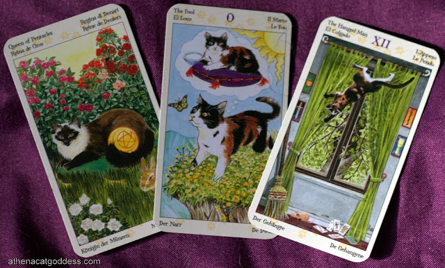 Pet Tarot Reading for Amber