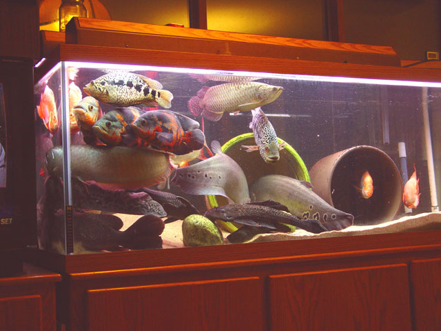 fish n tips large aquarium fish freshwater