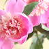 Favorite flowers - peonies and just happiness