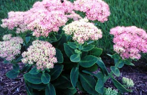 A GUIDE TO NORTHEASTERN GARDENING: Late Summer and Fall ...