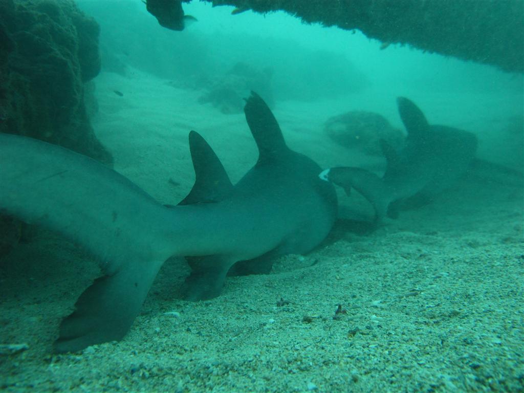 We saw 3 tasselled Wobbegong Sharks, many endemic catfish, and several ...