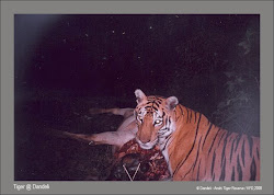 First camera trapped Tiger@Dandeli-Anshi Tiger Reserve: