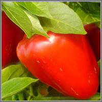 Сладкий перец сорт «Пересвет»