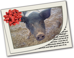Sponsor a Farm Animal in Need
