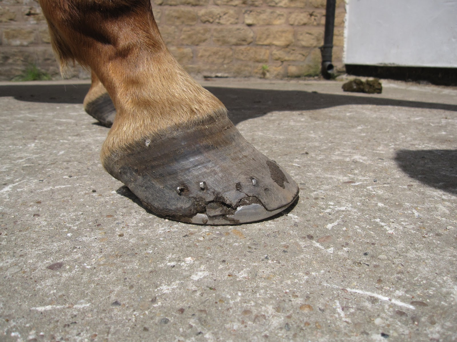 Flat Footed Horses Shoeing