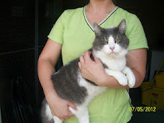 7/12/12  Urgent Cat DSH 1-2 YEARS OLD, MALE Will Be Killed If Not Rescued or Adopted