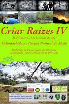 CRIAR RAÍZES IV