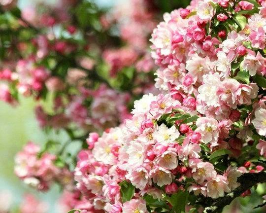 https://www.zibbet.com/seelifeshine/flower-photography-nature-photography-cherry-blossom-photo-bedroom-decor-flower-art-art-for-girls-room-eternity