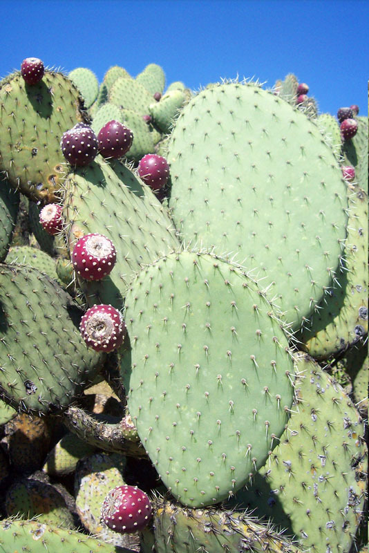 retired in mexico  how to plant a beautiful mexican garden