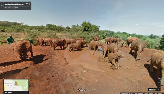 Walk alongside the elephants of the Samburu National Reserve in Street View