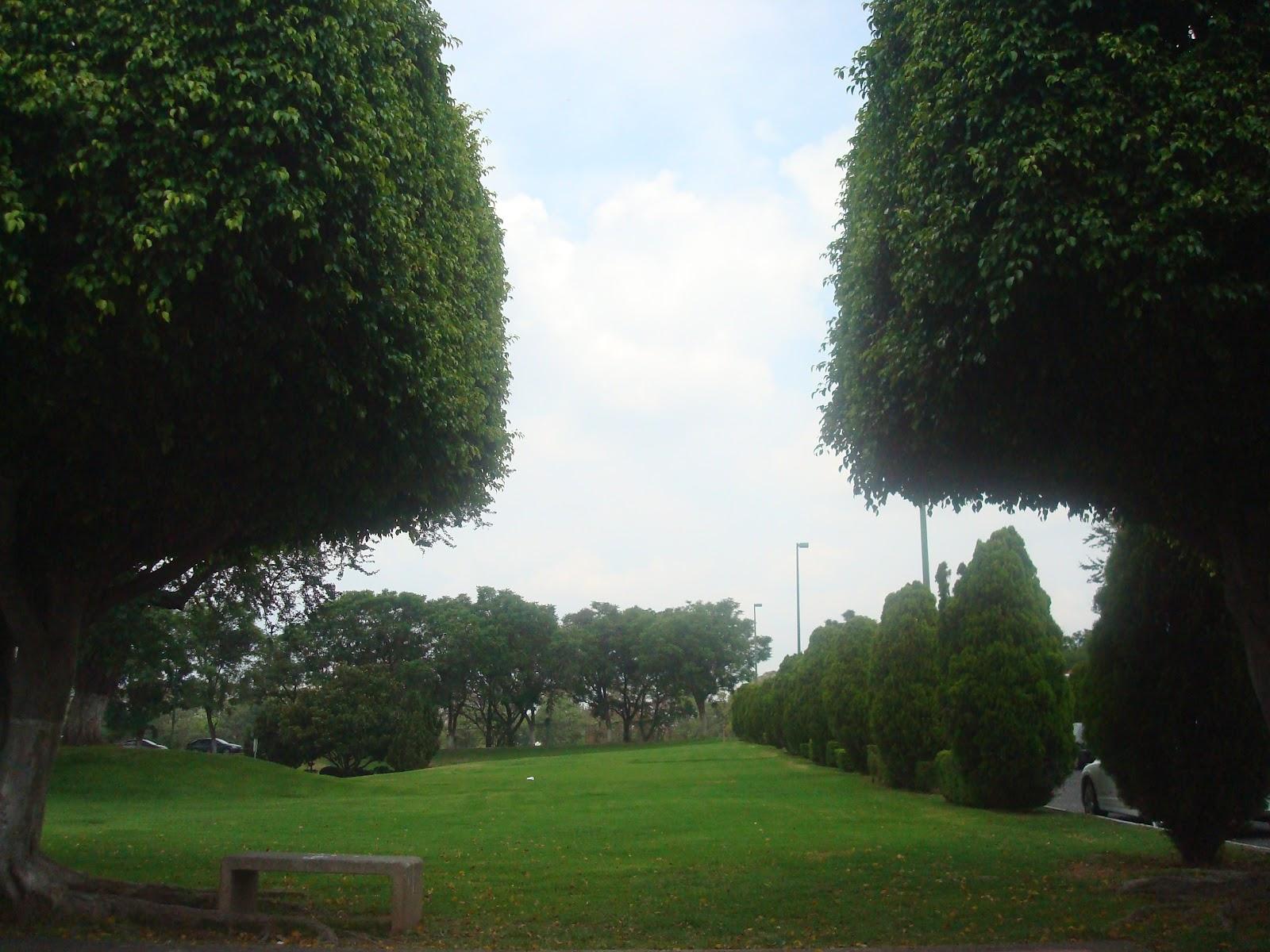 Sancarlosfortin jardin de pinos for Pinos para jardin