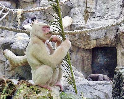 صور للحيوانات ساحرة جدا-منتهى