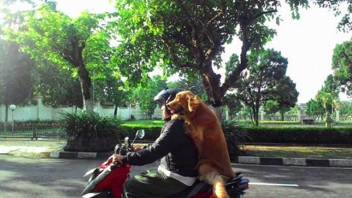 Gambar Unik Pengendara Motor Sama Soekor Anjing