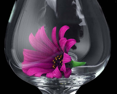 flowers-inside-glass-hd-wallpaperrs
