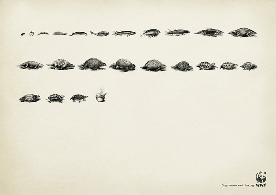 WWF: Evolution