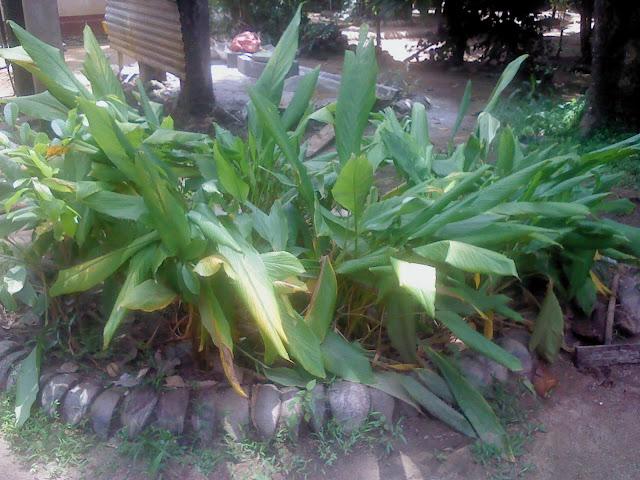 ranweli spice garden kandy