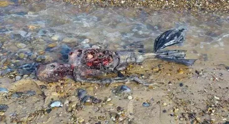 Μυστήριο με νεκρή «γοργόνα»- Το φριχτό πλάσμα που ξέβρασε η θάλασσα
