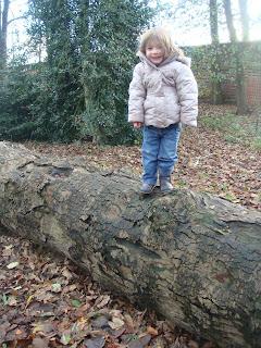 on tree