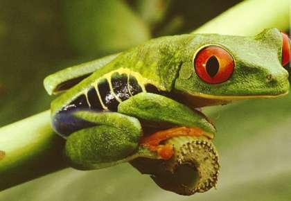 Endangered Species & Extinction Of Species