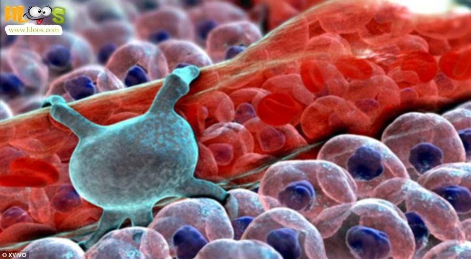 معلومات عامة البكتريا في جسم الانسان