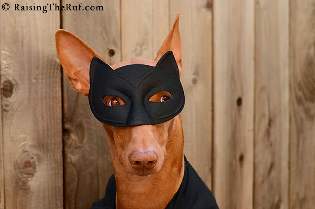 rufus the batdog