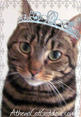 cat with tiara