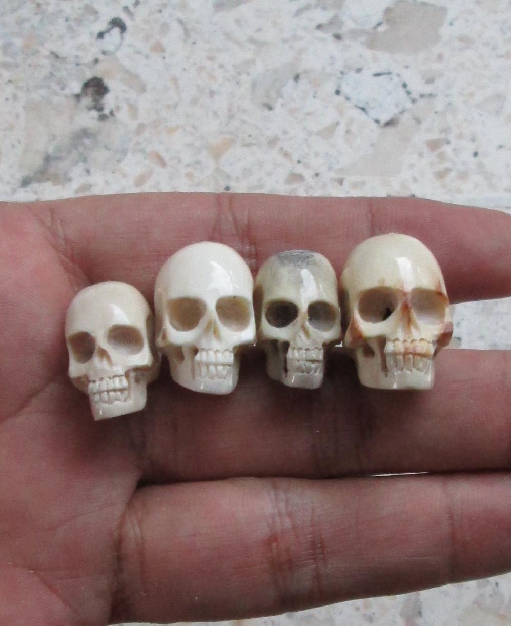 Skulls in Antler