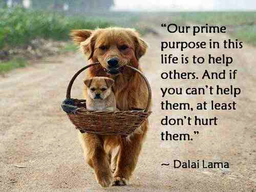 Our prime purpose in this life is to help others. And if you can't help them, at least don't hurt them. Dalai Lama Quote