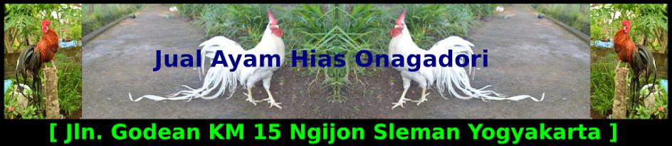 Jual Ayam Hias Onagadori | Ayam Ekor Panjang | Ayam Onagadori