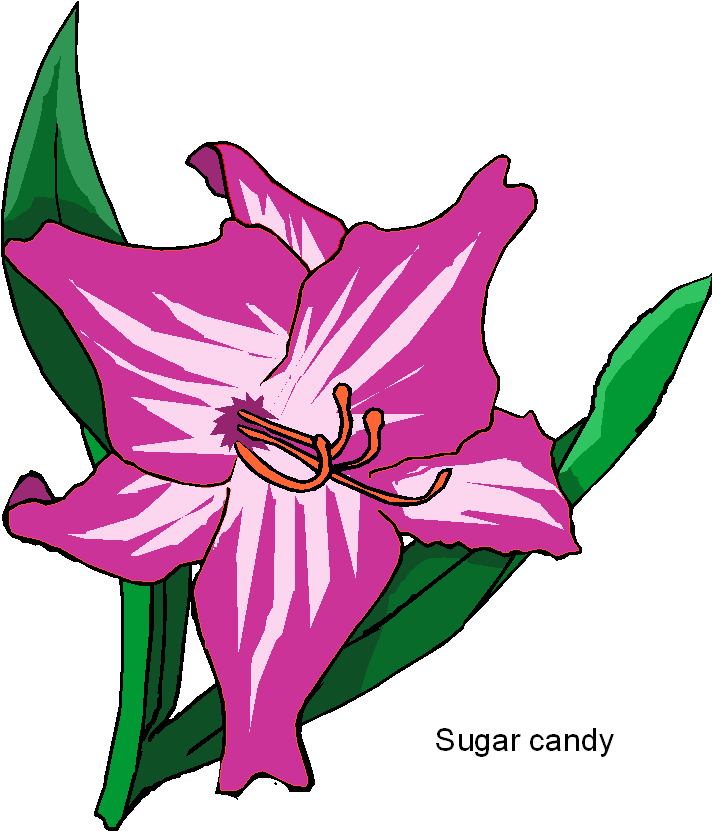 Sugar Candy Flower Free Clipart