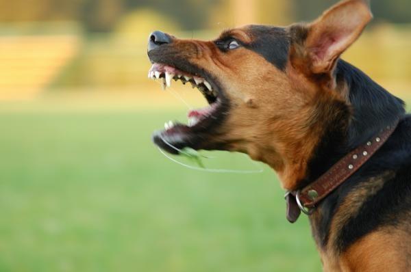 pet shop Por que o Comportamento Agressivo do Cão