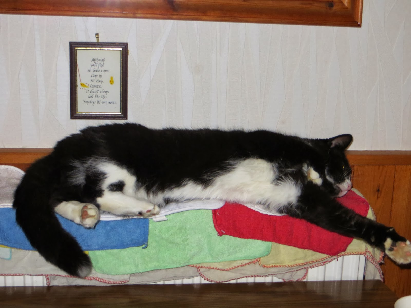 Alfie feeling lazy and warm!!
