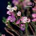 Friday Flowerday 5