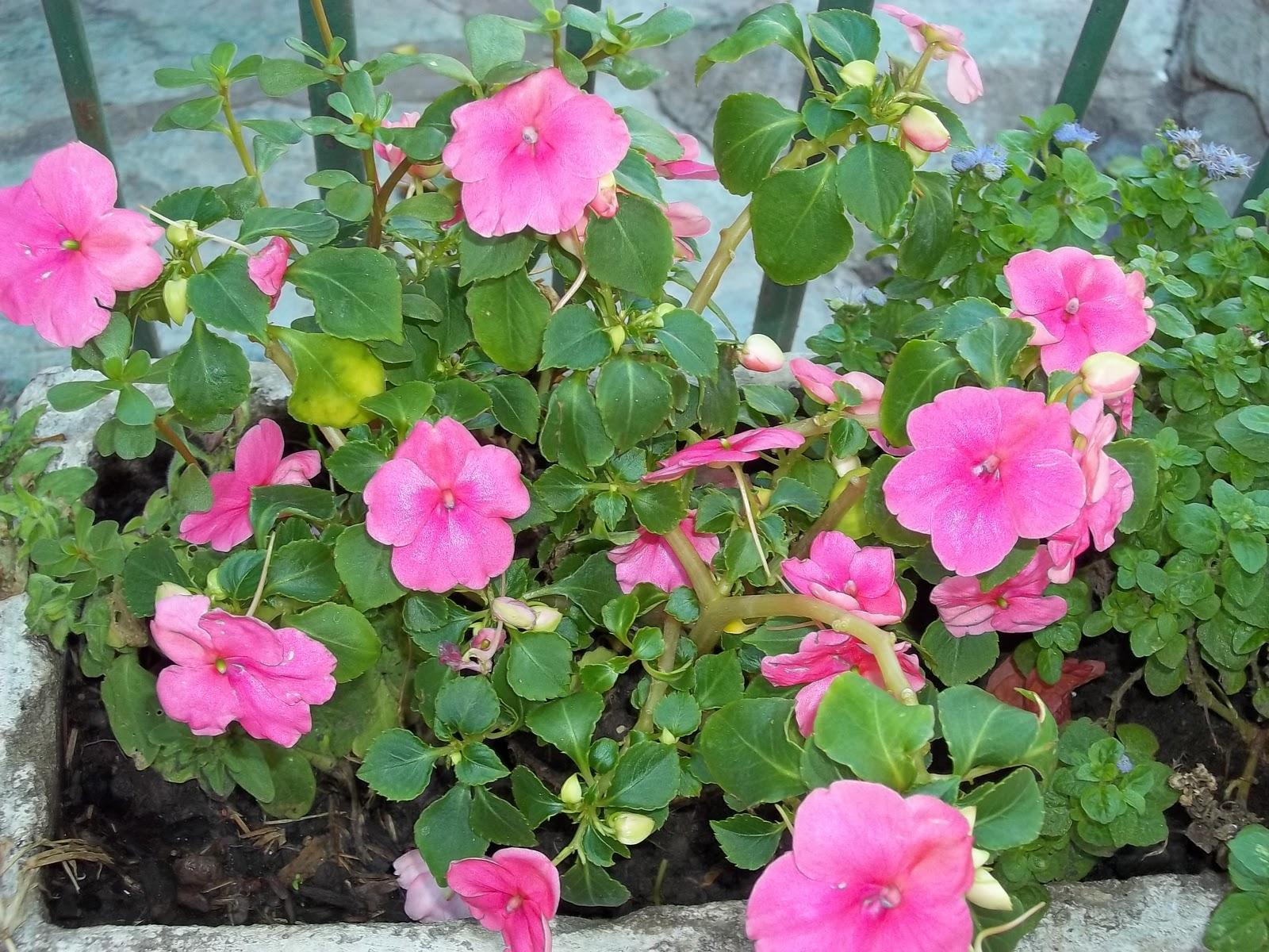 Consejos para el riego - Plantas para el jardin todo el ano ...