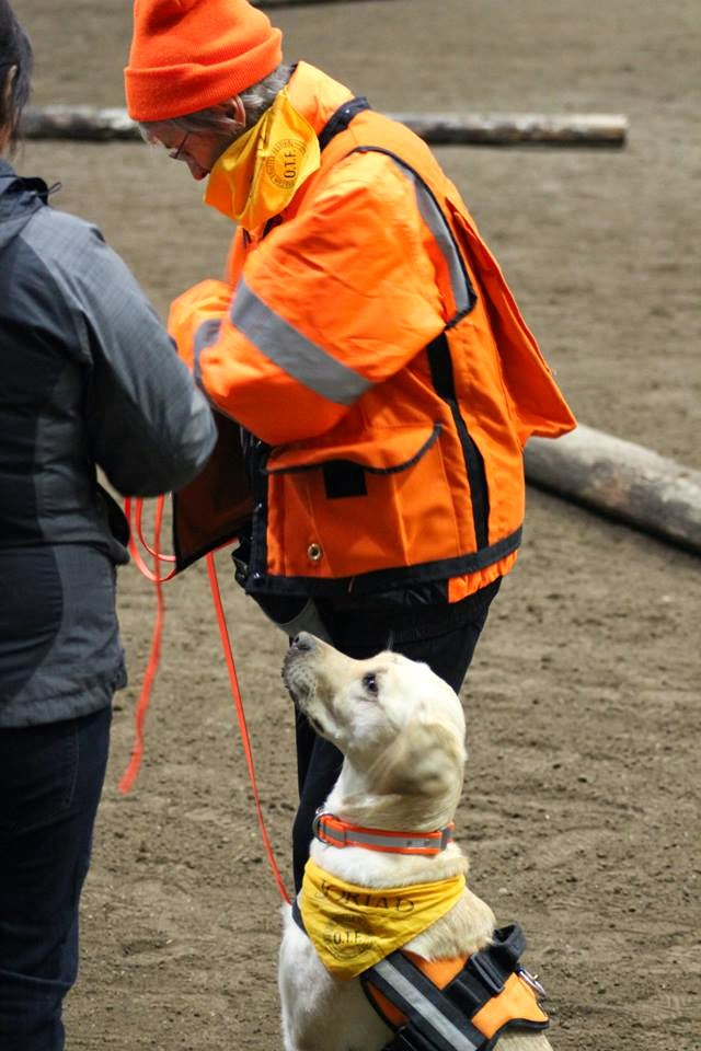 Gucci (yellow Lab) sits very upright waiting to begin the competition round with her handler Marilyn by her side.