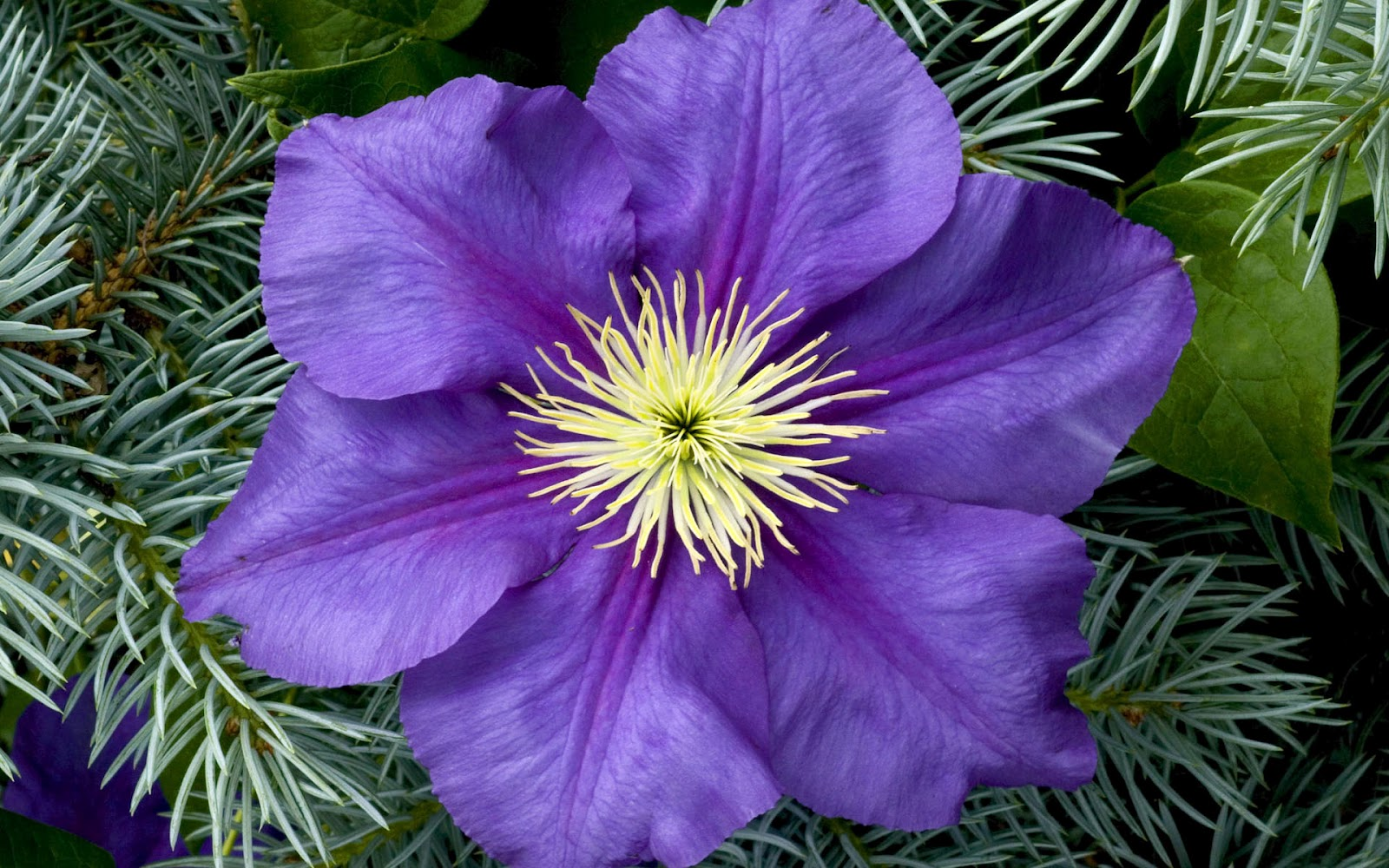 http://2.bp.blogspot.com/-_YLVzcF53PY/T14nYzP34EI/AAAAAAAAAVs/NsYroX-YoV8/s1600/Wonderful+Flowers+HD+Wallpapers+%2846%29.jpg