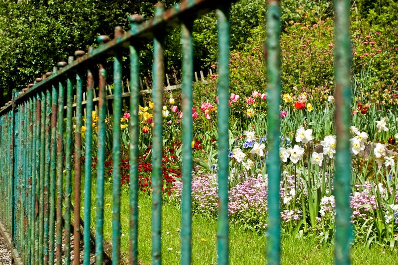 Kelvingrove Park flowers