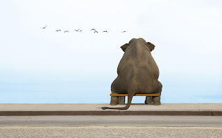 Elephant On A Small Bench Birds Water Funny HD Love Wallpaper