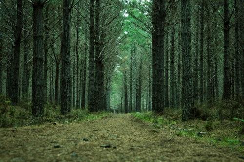 Bosque de Woodhill Crónicas de Narnia