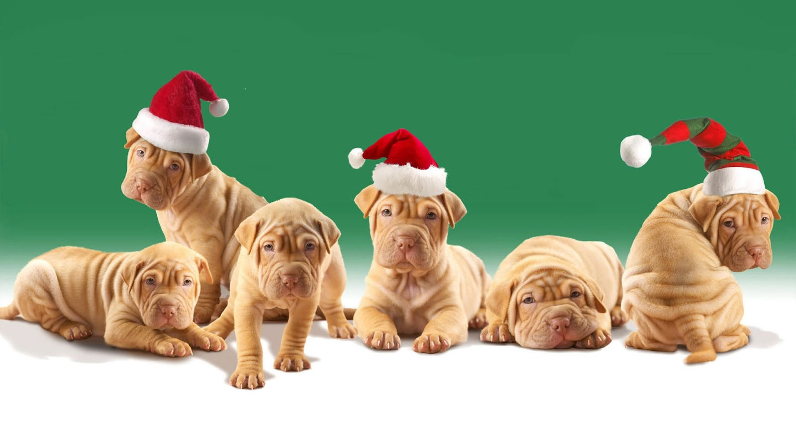 sweet dog in christmas wallpapers backgrounds | dogs wallpapers